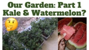 Garden Kale Watermelon LP Share