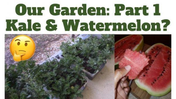 Garden Kale Watermelon LP Share
